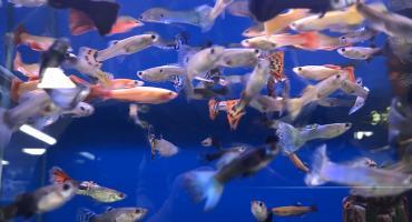 Foto van gekleurde vissen