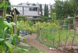 Over de rol van opbouwwerk in de wijkteams in Nijmegen