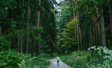 Door de bomen het bos weer zien