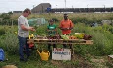 Buurtcommunities: Stadstuin Ubuntu